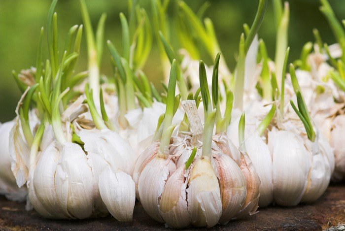 home remedies for toothache - garlic