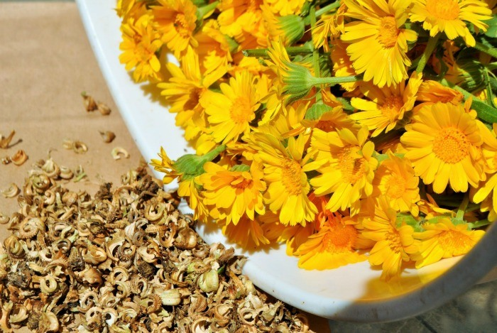 home remedies for eczema - calendula flowers & lavender essential oil