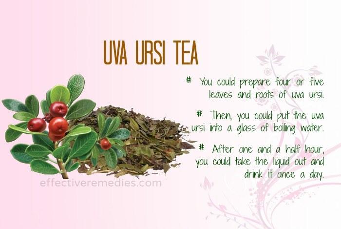 home remedies for uti - uva ursi tea