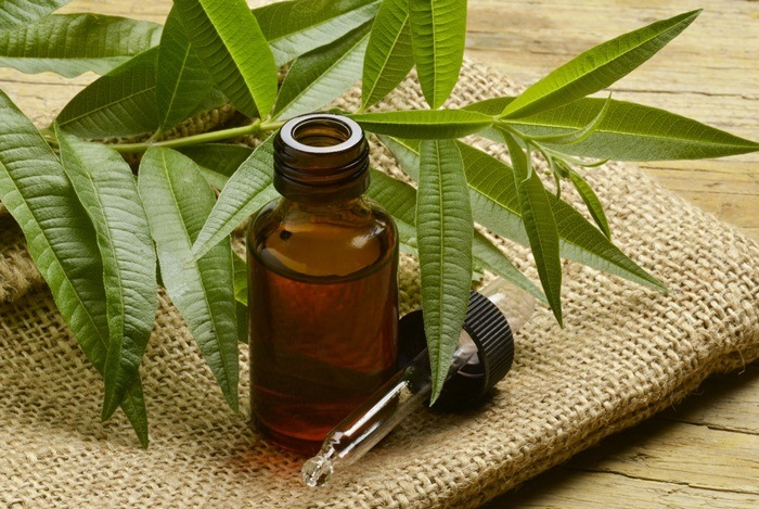home remedies for boils - tea tree oil