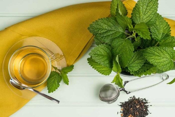 home remedies for hyperthyroidism - lemon balm