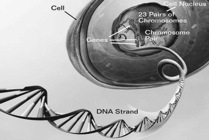 genes behind healthy aging in humans