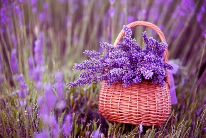 home remedies for depression - lavender