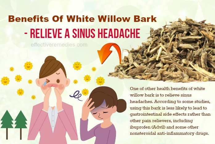 benefits of white willow bark - relieve a sinus headache