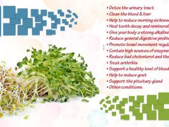 benefits of alfalfa