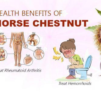 Benefits Of Horse Chestnut