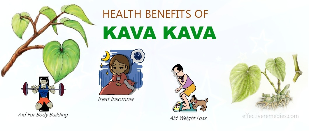 What Is Kava? 10 Must-Know Facts