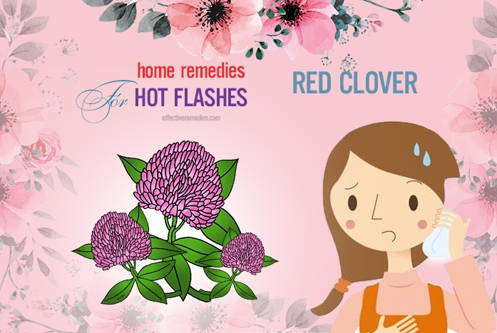 home remedies for hot flashes - red clover