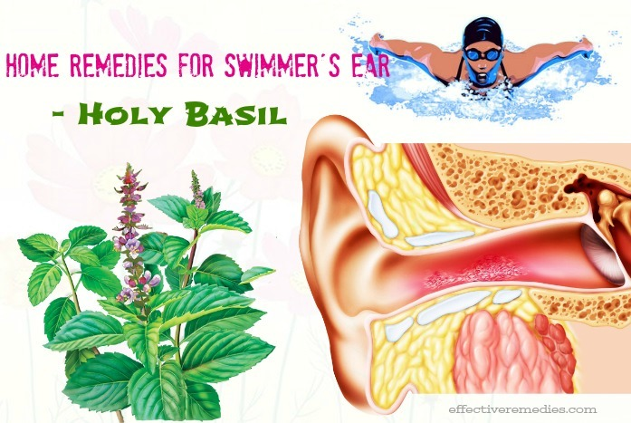 home remedies for swimmer's ear - holy basil