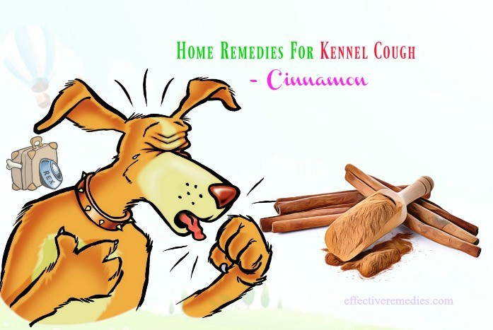 home remedies for kennel cough - cinnamon