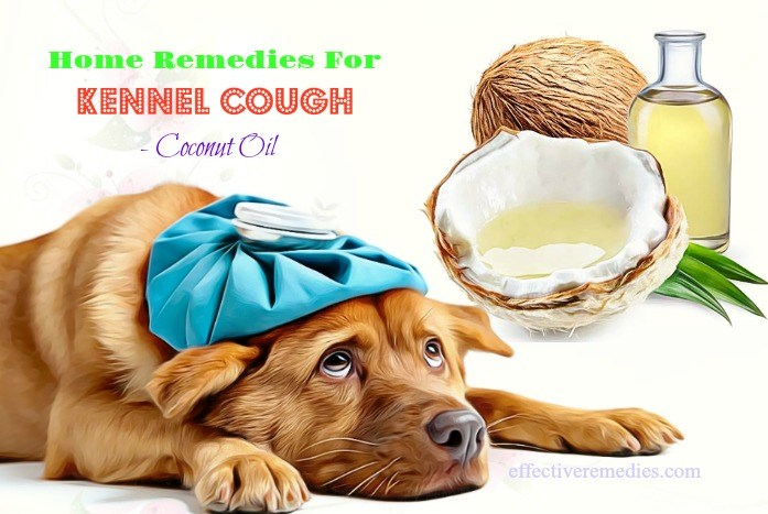 natural home remedies for kennel cough - coconut oil