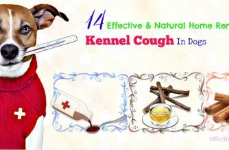 natural home remedies for kennel cough