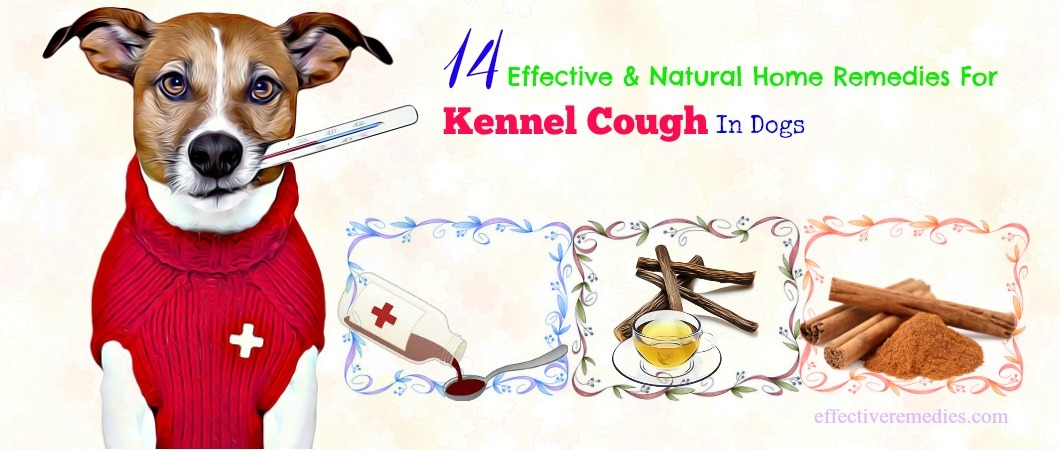 Top 14 Natural Home Remedies For Kennel Cough In Dogs Revealed