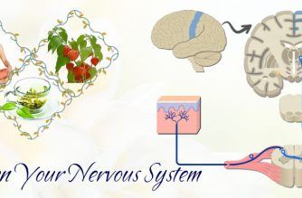 how to strengthen your nervous system naturally